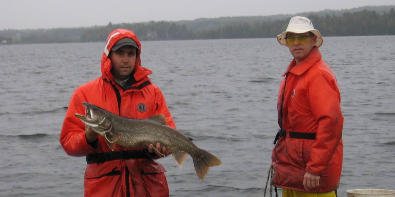 Les poissons : questionnements et études