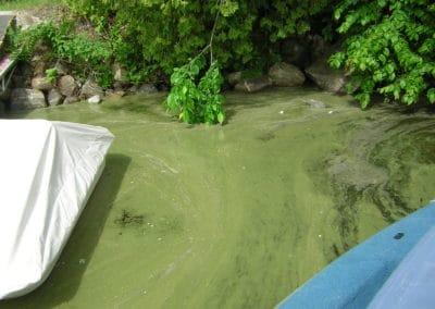 Algues bleues 8