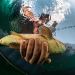 Résultats des pêches expérimentales